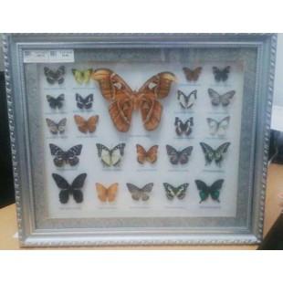 Cuadro enmarcado de mariposas naturales